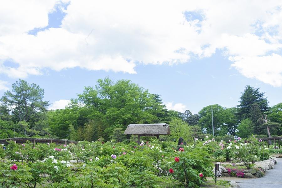 須賀川牡丹園:東京ドーム約3倍の広さの園内に290種、7000株もの牡丹が咲き競う庭園。見頃は4月下旬〜5月中旬