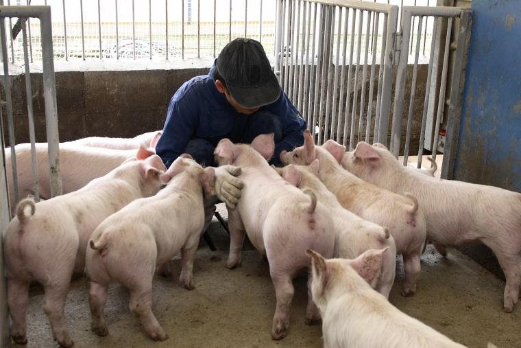 なぜ1ヶ月に100頭の養豚場が人気...
